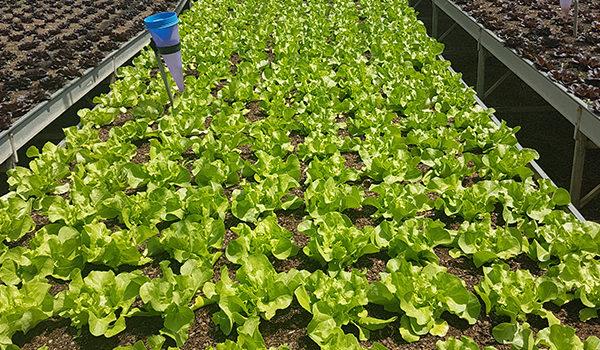 seedling 3