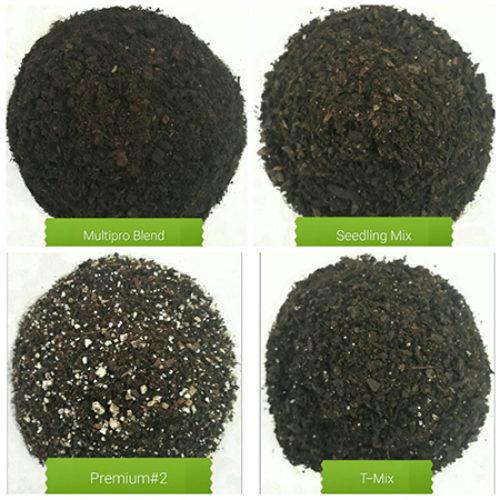 seedling germ